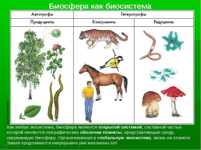 Биосфера как биосистема Как любая экосистема, биосфера является открытой сист...