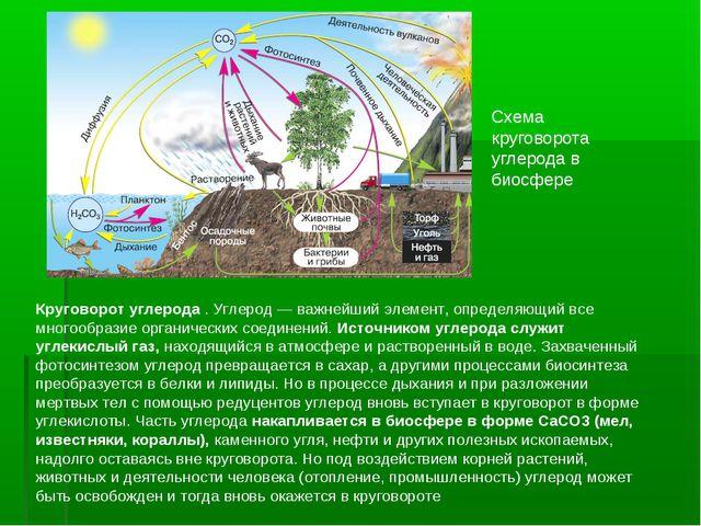 Схема круговорота углерода в биосфере Круговорот углерода . Углерод— важнейш...