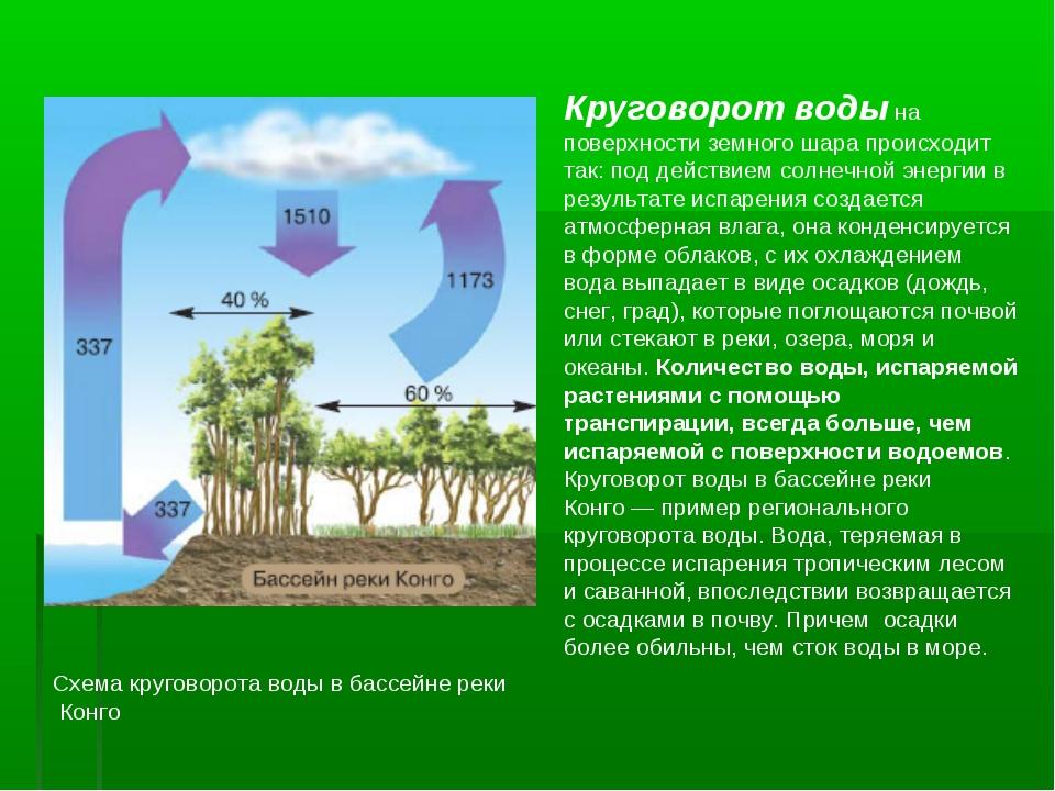 Схема круговорота воды в бассейне реки Конго Круговорот воды на поверхности з...