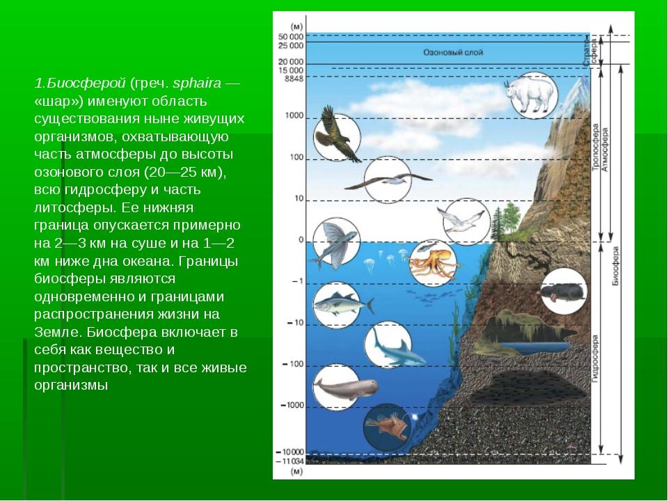 1.Биосферой (греч. sphaira— «шар») именуют область существования ныне живущи...