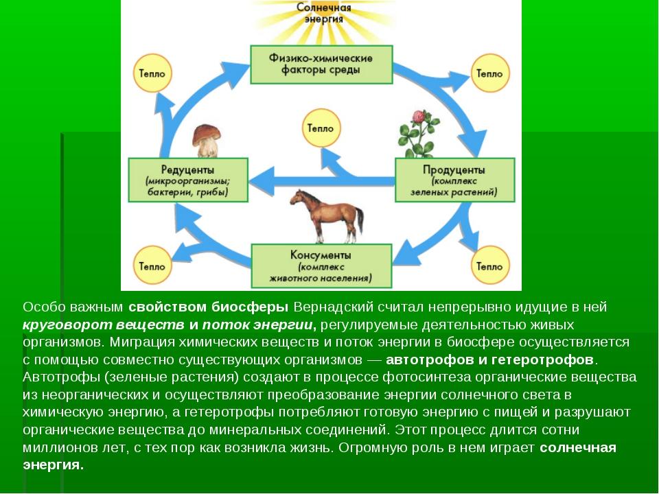 Особо важным свойством биосферы Вернадский считал непрерывно идущие в ней кру...