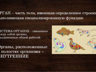 СИСТЕМА ОРГАНОВ – связанные между собой органы, объединенные общей работой Ор