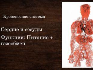 Кровеносная система Сердце и сосуды Функции: Питание + газообмен