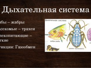 Дыхательная система Рыбы – жабры Насекомые – трахеи Млекопитающие – легкие Фу