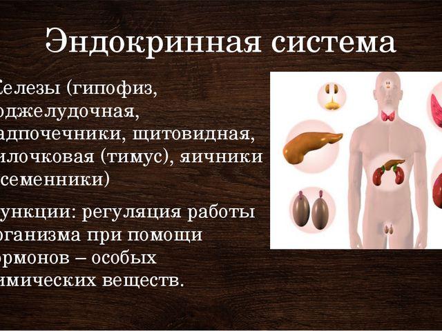 Эндокринная система Железы (гипофиз, поджелудочная, надпочечники, щитовидная,...