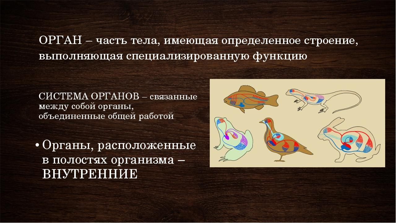 СИСТЕМА ОРГАНОВ – связанные между собой органы, объединенные общей работой Ор...