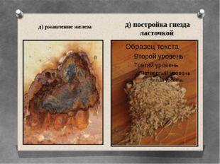 д) ржавление железа д) постройка гнезда ласточкой