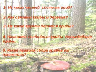 1. Из каких частей состоит гриб? 2. Как связаны грибы и деревья? 3. На какие