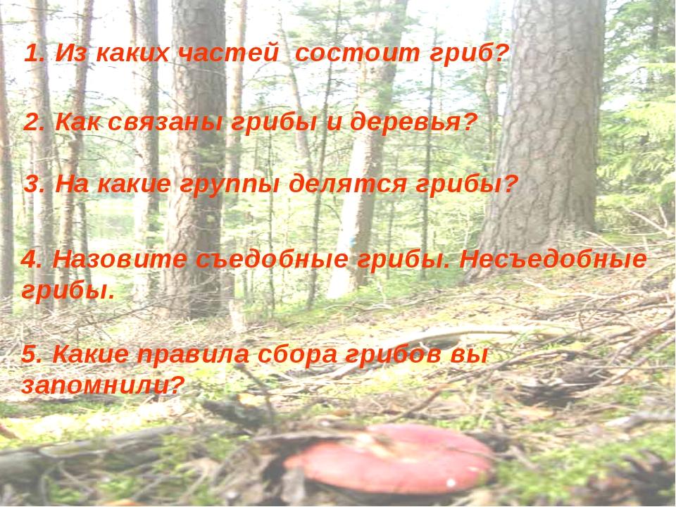 1. Из каких частей состоит гриб? 2. Как связаны грибы и деревья? 3. На какие...