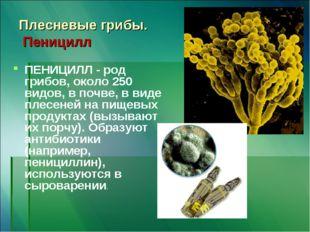 Плесневые грибы. Пеницилл ПЕНИЦИЛЛ - род грибов, около 250 видов, в почве, в