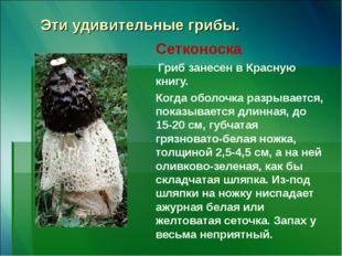 Эти удивительные грибы. Сетконоска Гриб занесен в Красную книгу. Когда оболоч