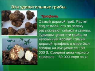 Эти удивительные грибы. Трюфель Самый дорогой гриб. Растет под землей, его по