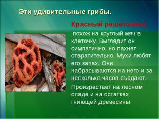 Эти удивительные грибы. Красный решеточник похож на круглый мяч в клеточку. В