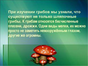 При изучении грибов мы узнали, что существуют не только шляпочные грибы. К гр