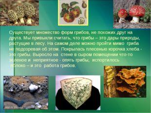 Существует множество форм грибов, не похожих друг на друга. Мы привыкли счит