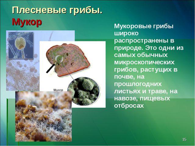 * Плесневые грибы. Мукор Мукоровые грибы широко распространены в природе. Это...