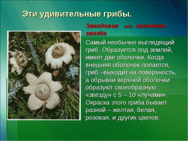 Эти удивительные грибы. Звездовик или земляная звезда Самый необычно выглядящ...