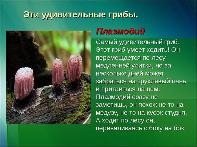 Эти удивительные грибы. Плазмодий Самый удивительный гриб. Этот гриб умеет хо...
