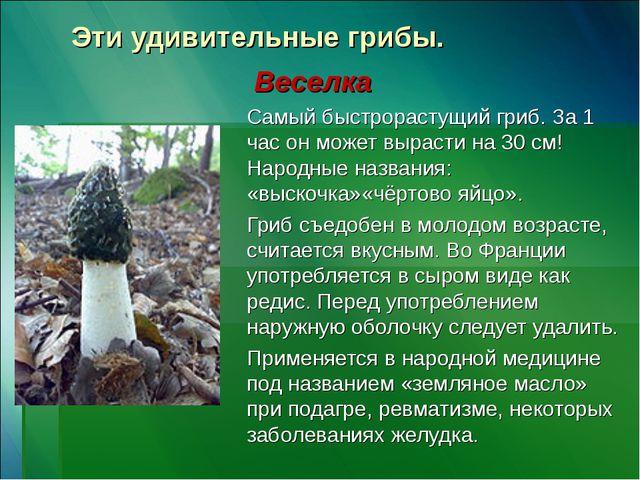Эти удивительные грибы. Веселка Самый быстрорастущий гриб. За 1 час он может...