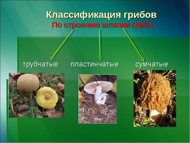 Классификация грибов По строению шляпки гриба трубчатые пластинчатые сумчатые