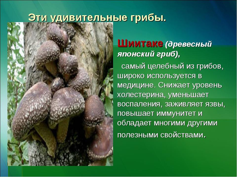 Эти удивительные грибы. Шиитаке (древесный японский гриб),  самый целебный и...