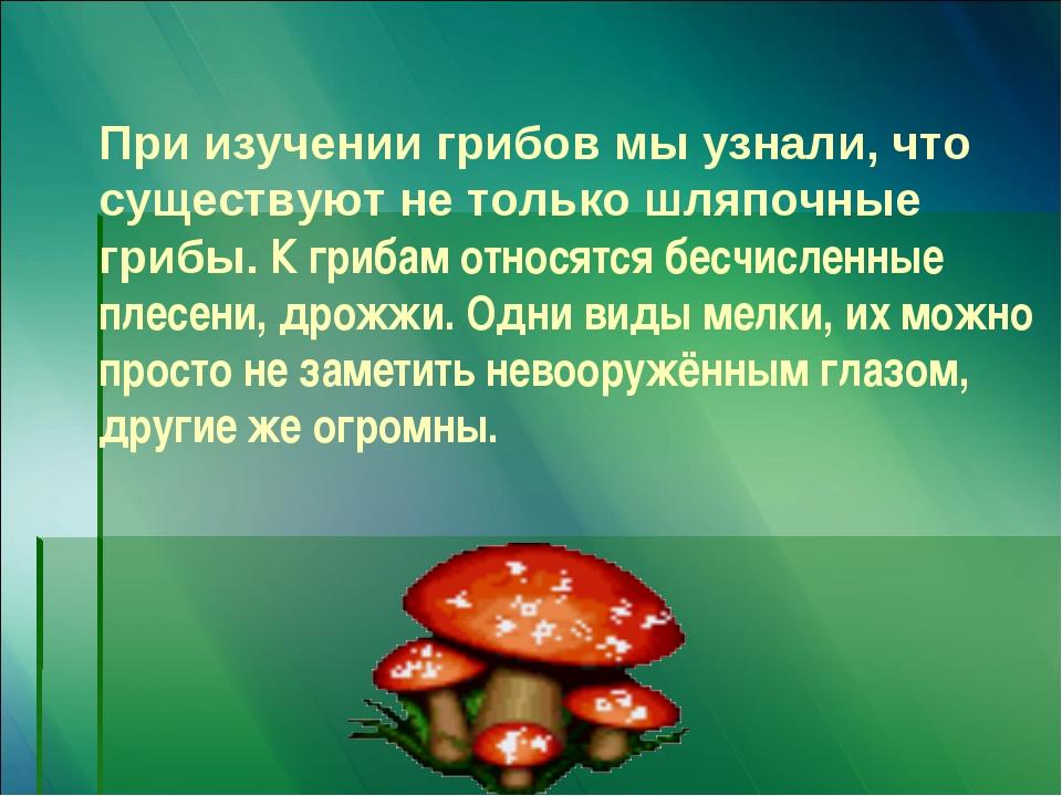 При изучении грибов мы узнали, что существуют не только шляпочные грибы. К гр...