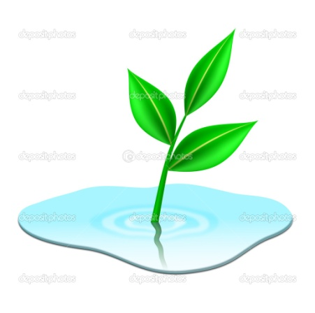 http://static8.depositphotos.com/1268375/799/v/950/depositphotos_7996641-Green-plant-growing-from-puddle.jpg