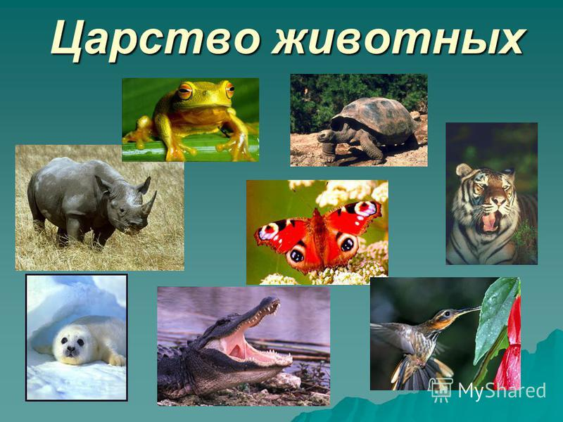 http://images.myshared.ru/17/1125436/slide_1.jpg
