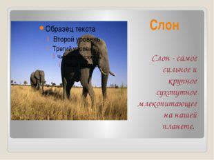 Слон Слон - самое сильное и крупное сухопутное млекопитающее на нашей планете.