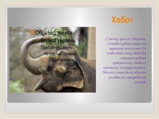 Хобот . С точки зрения ловкости, слоновий хобот похож на щупальце осьминога.