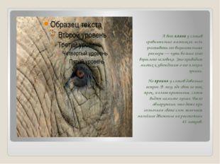 А вот глаза у слонов сравнительно маленькие, если учитывать его внушительные