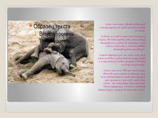 Спят слоны стоя, собравшись вместе в плотную группу. Сон продолжается порядк