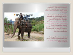 Для местных жителей слон — это универсальное транспортно-погрузочное средств