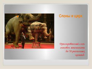 Слоны и цирк Дрессированный слон способен запоминать до 70 различных команд.