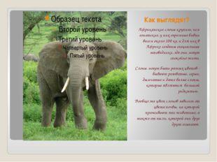 Как выглядят? Африканские слоны крупнее, чем азиатские, у них огромные бивни