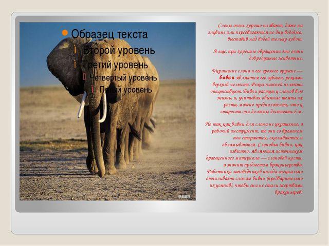 Слоны очень хорошо плавают, даже на глубине или передвигаются по дну водоёма...