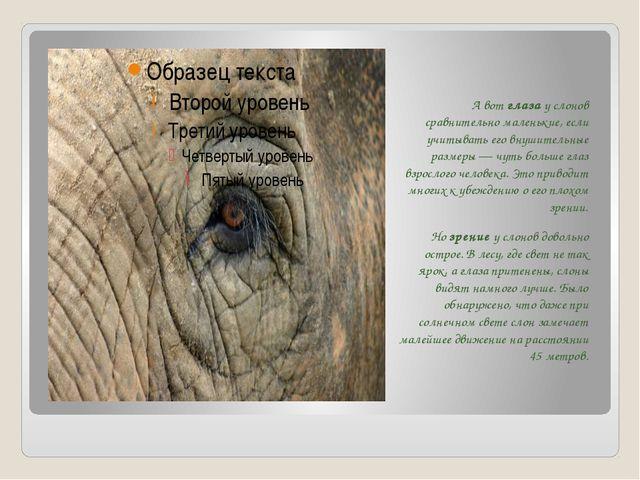 А вот глаза у слонов сравнительно маленькие, если учитывать его внушительные...