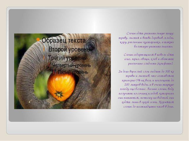 Слоны едят растительную пищу: траву, листья и ветви деревьев, плоды, кору, р...