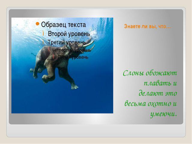 Знаете ли вы, что… Слоны обожают плавать и делают это весьма охотно и умеючи.