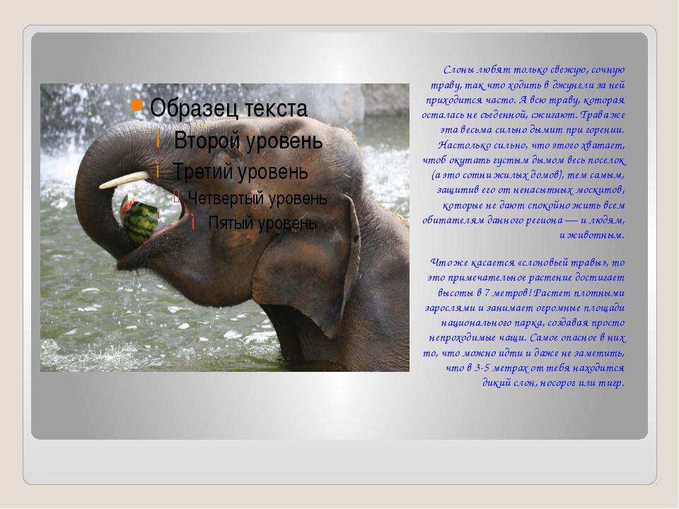 Слоны любят только свежую, сочную траву, так что ходить в джунгли за ней при...