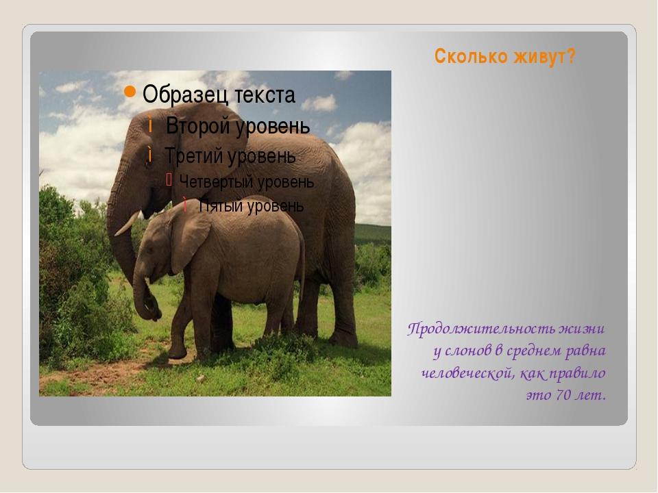 Сколько живут? Продолжительность жизни у слонов в среднем равна человеческой,...