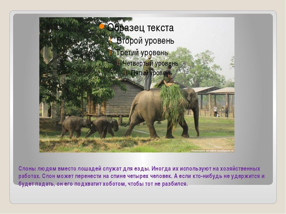 Слоны людям вместо лошадей служат для езды. Иногда их используют на хозяйстве...