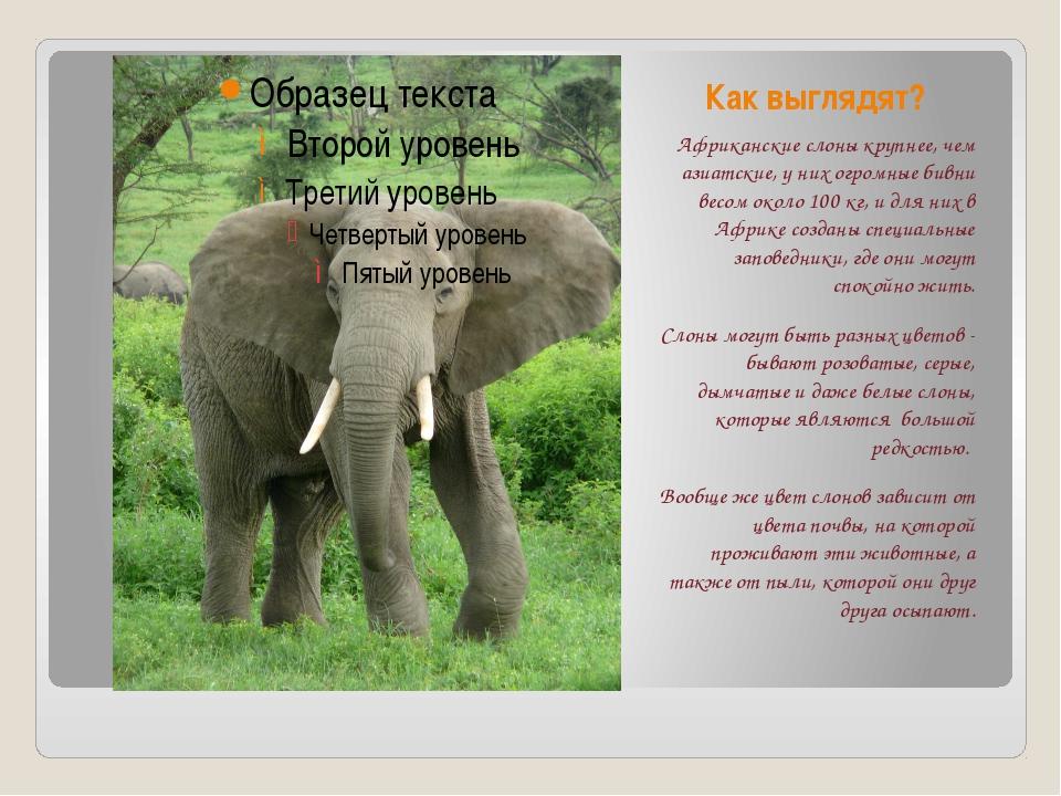 Как выглядят? Африканские слоны крупнее, чем азиатские, у них огромные бивни...