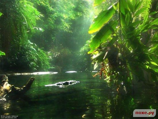 C:\Users\Татьяна\Pictures\зелень и вода.jpg