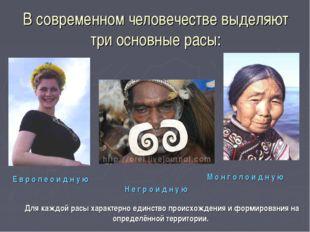 В современном человечестве выделяют три основные расы: Н е г р о и д н у ю Е