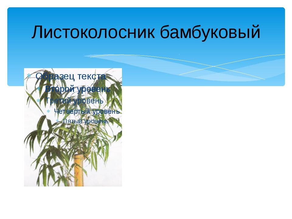 Листоколосник бамбуковый