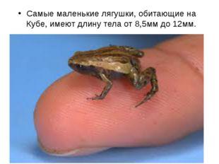 Самые маленькие лягушки, обитающие на Кубе, имеют длину тела от 8,5мм до 12мм.