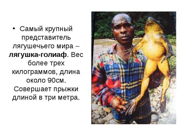 Самый крупный представитель лягушечьего мира – лягушка-голиаф. Вес более тре...