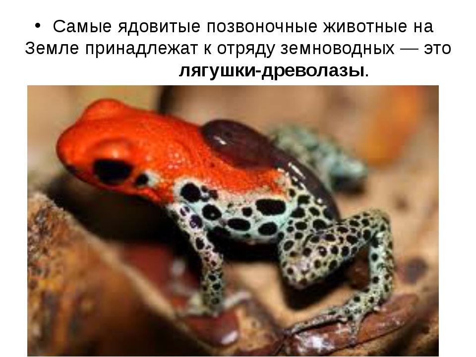 Самые ядовитые позвоночные животные на Земле принадлежат к отряду земноводны...