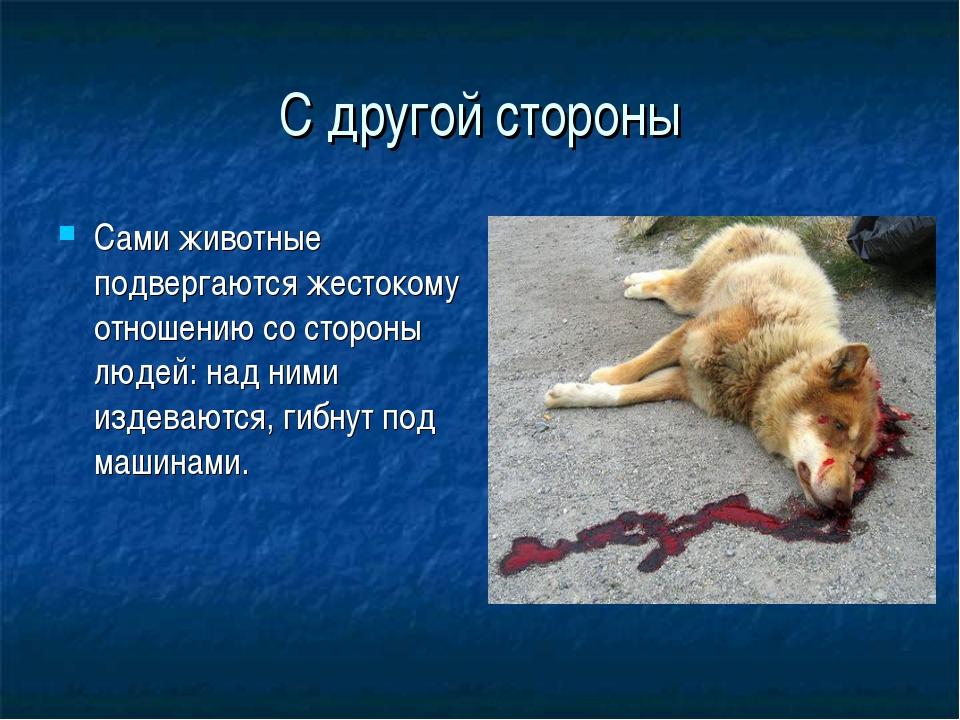 С другой стороны Сами животные подвергаются жестокому отношению со стороны лю...
